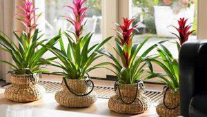 kışta çiçek nasıl bakılır, kış aylarında çiçek bakımı, kışta çiçek bakımı nasıl olmalı