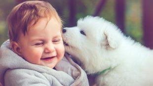 hayvan sevgisi, çocuklar ve hayvan sevgisi, hayvan sevgisinin çocuklara etkisi