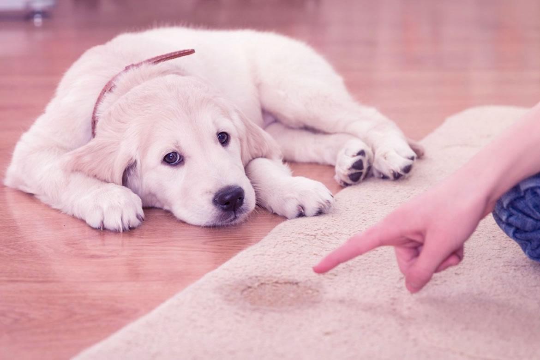 evcil hayvan bakımı, evcil hayvan nasıl bakılır, evcil hayvanlarda dikkat edilmesi gerekenler